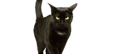 El famoso gato negro no es el único animal que atrae la mala suerte