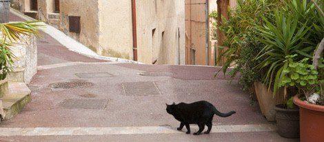 Encontrarte un gato negro de espaldas denota que la buena suerte no está de tu lado
