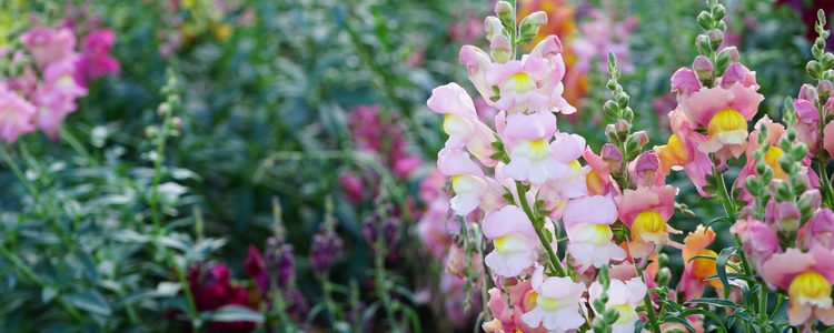 Las flores son un elemento ideal e indispensable para poder atraer la buena suerte en primavera