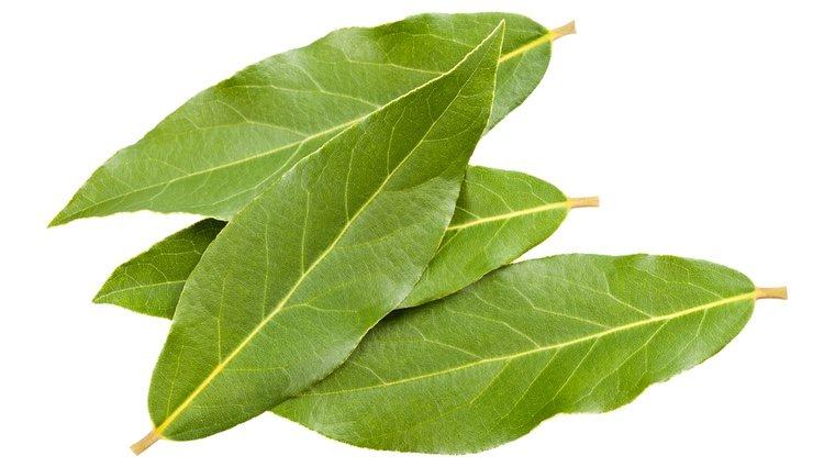 Las hojas de laurel son necesarias para rituales para el trabajo