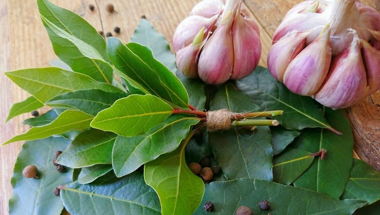 El ajo y el laurel son útiles para realizar hechizos de protección