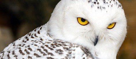 Supersticiones Animales Que Traen Mala Suerte Bekia Horóscopo