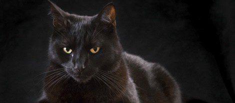 Sobre el gato negro recaen varias supersticiones