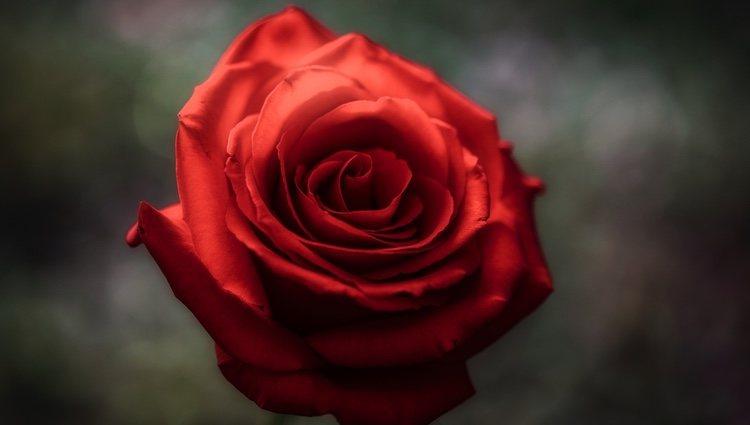 A los Géminis les gustan los olores naturales, como el de las rosas o los geranios