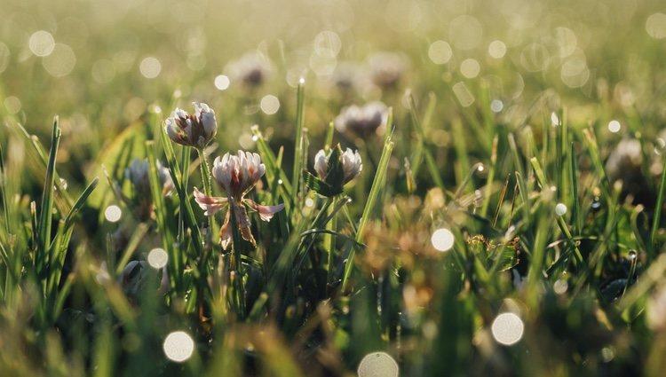 A los Virgo les gustan los aromas que recuerdan al verde, como el de la hierba