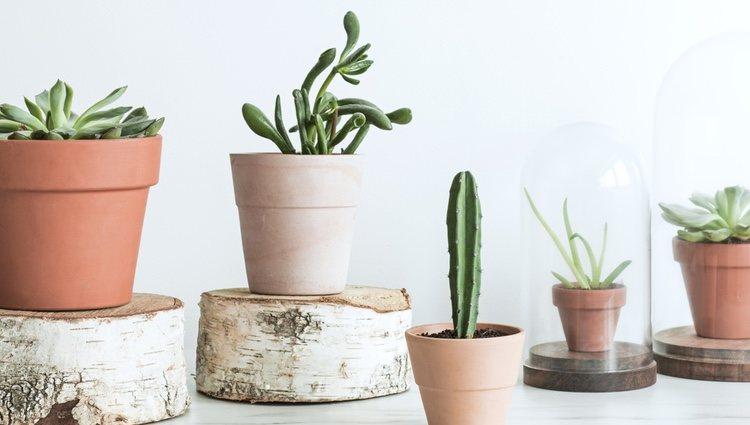 Las plantas alivian las malas vibraciones