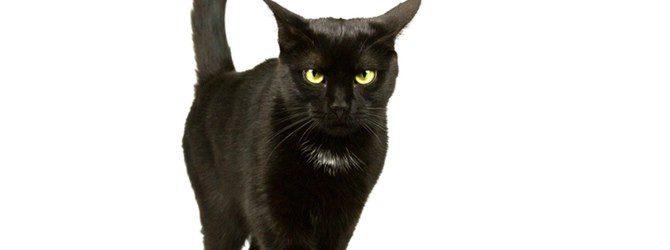 Supersticiones: animales que traen mala suerte
