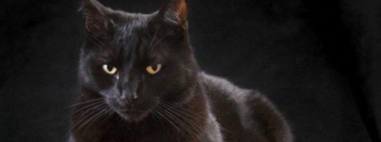 Supersticiones el origen de que los gatos negros den mala - El gato negro decoracion ...